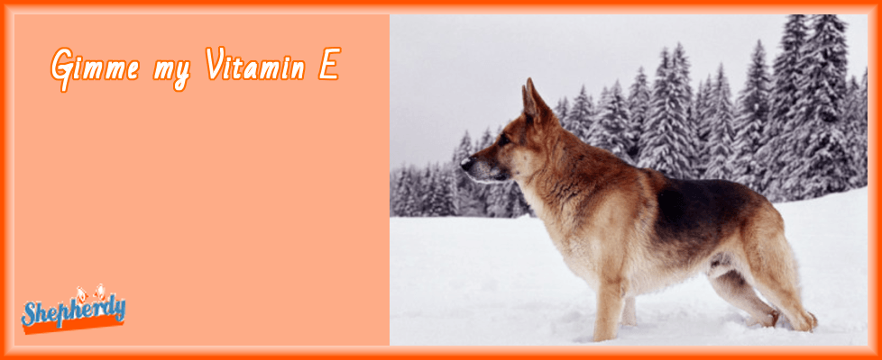 Vitamin E for dogs