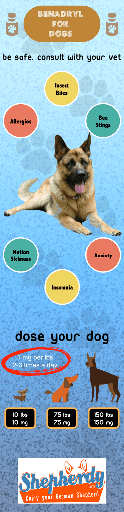 Benadryl for dogs - InfoGraphic