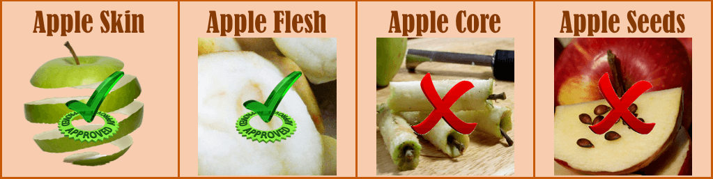 Can dogs eat apples - Infographic
